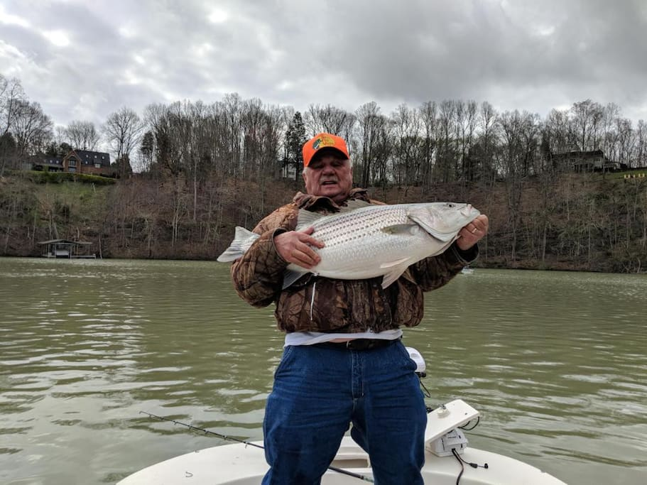 Our guest Bob caught a 40 lb stripe bass on Melton Hill Lake.