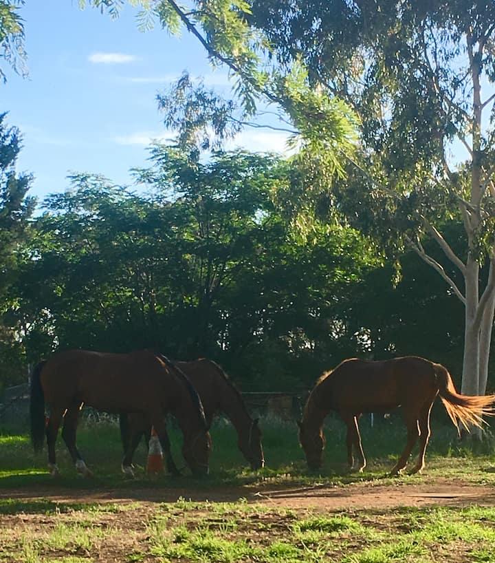 Corriedale Equestrian