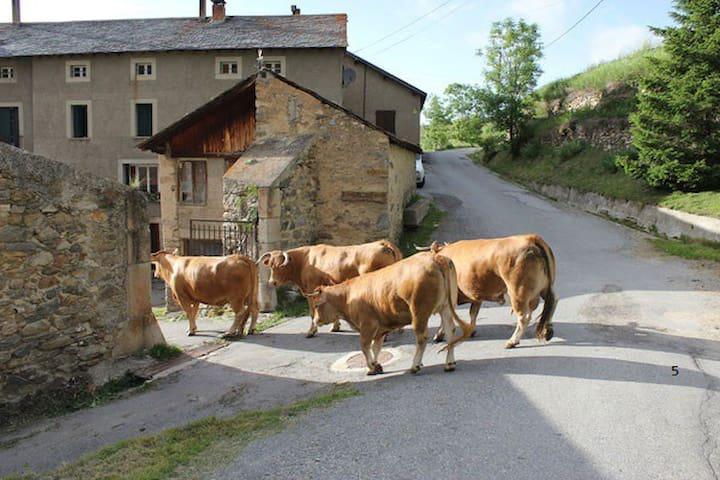 GÎTE A LA FERME - Pyrénées catalanes - Montagne 5 - Planès - Wohnung