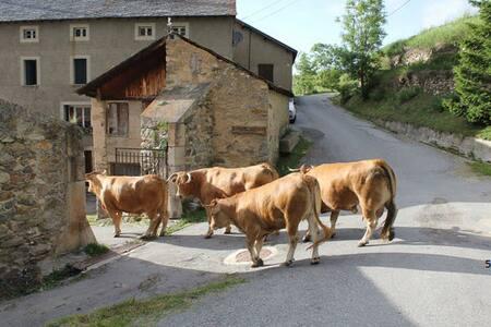 GÎTE A LA FERME - Pyrénées catalanes - Montagne 5 - Planès - Leilighet