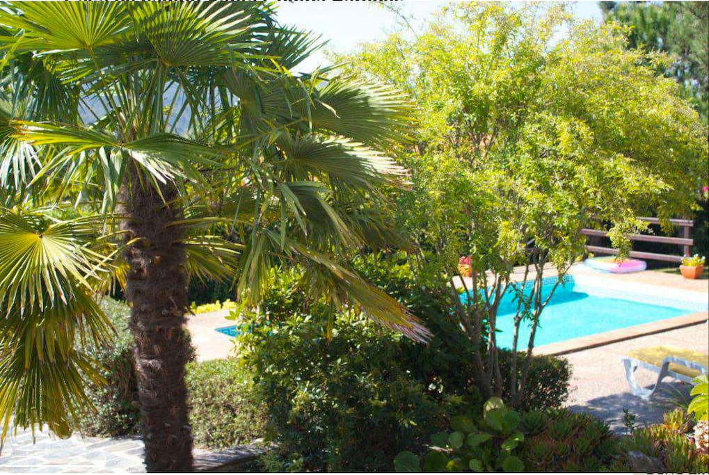 View to the pool from the porche