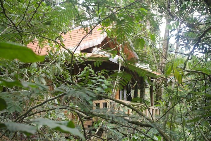 Munduk Avocado House jungle valley view