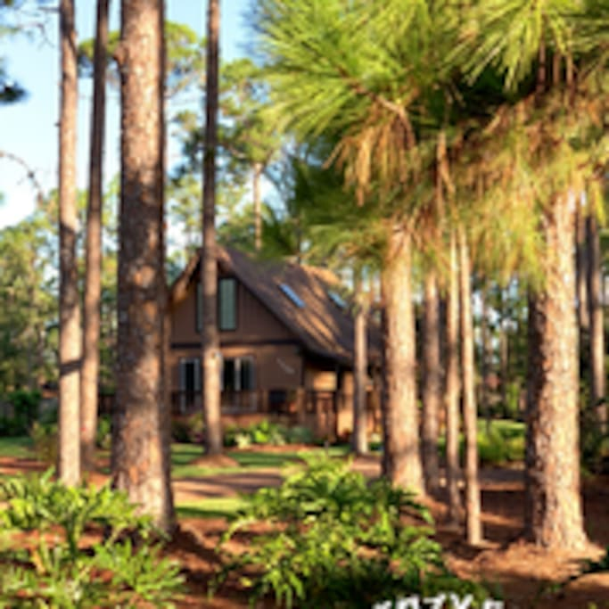 The Cozy Cabin is nestled in an acre of landscaped woods, in the middle of a neighborhood!  Come and see for yourself!