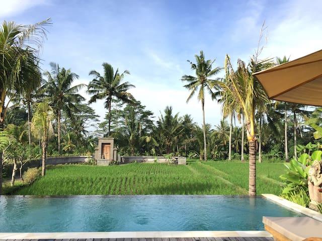 Serenity and Nature @The Suris Ubud