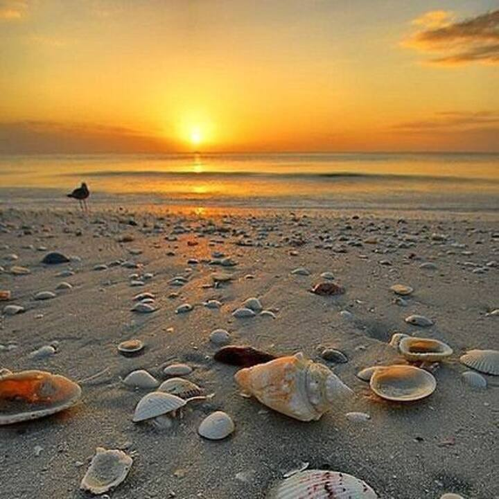 Réveillon Campeche Apartamento  pé na areia