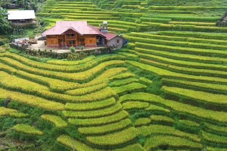 Ta van home with rice paddies
