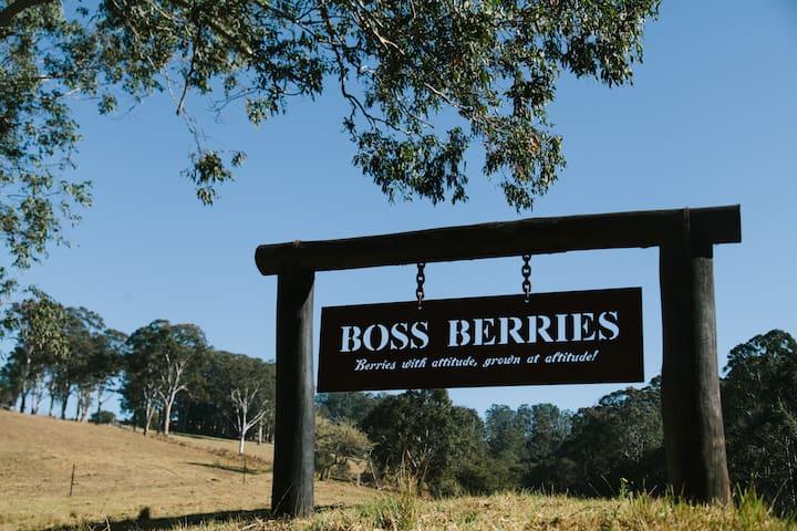 Boss Berries