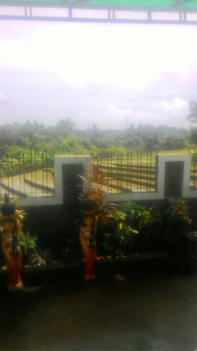Rice field view from Terrace with very fresh air and beautiful bird voices every morning
