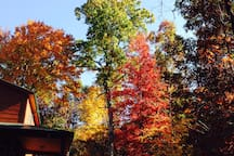 Fall is especially beautiful here at my home, never know what it's going to look like but usually outstanding colored foliage.