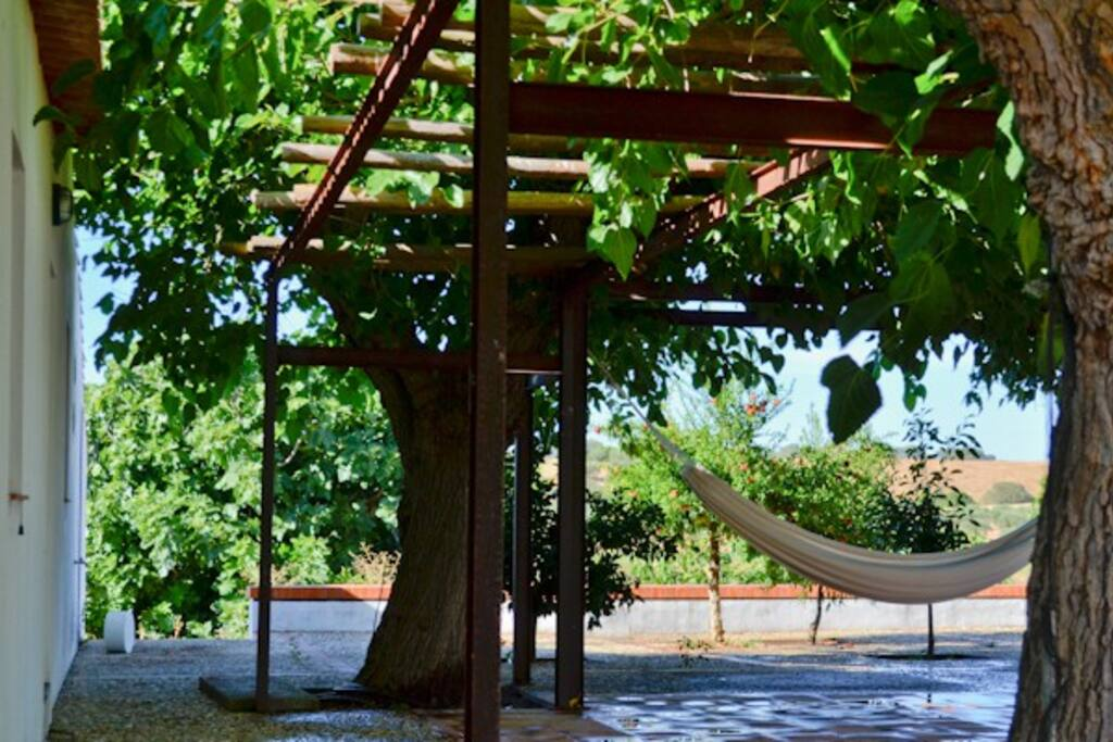 Hammock in the Mulberries shade