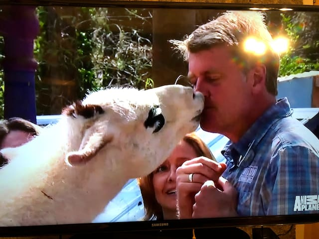 Dali kissing Pete Nelson from Animal Planet's Treehouse Masters.