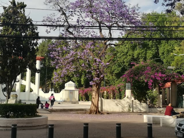 Guidebook for Hipódromo, Condesa and Roma
