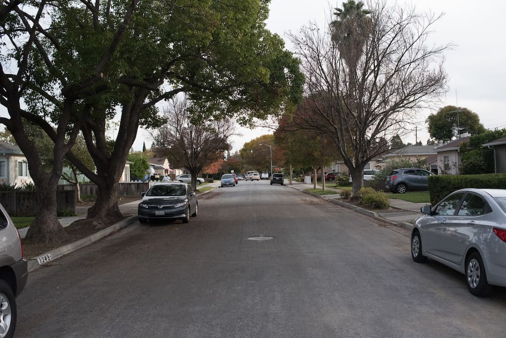 View of quiet street with mature oak trees.
