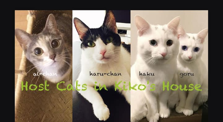 I have 4 cat hosts.Cat lovers can also enjoy !
