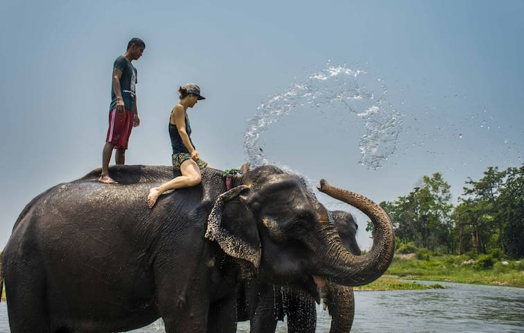 Safari Club Resort Stay Chitwan National Park