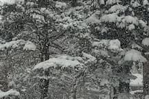 Winter wonderland view of snow covered pine trees on the lake from your picture window