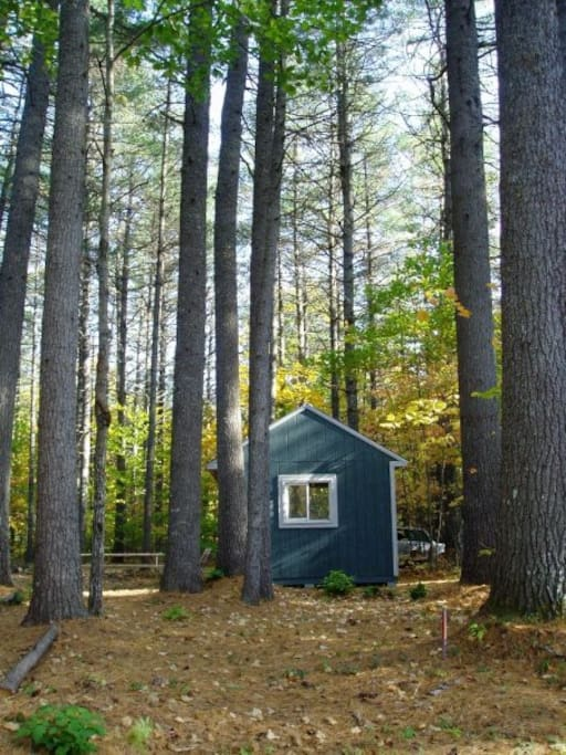 The cabin tucked amongst tall pine trees.
