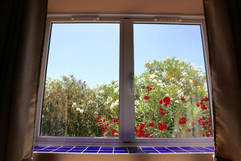 Window that looks out into the oleander garden