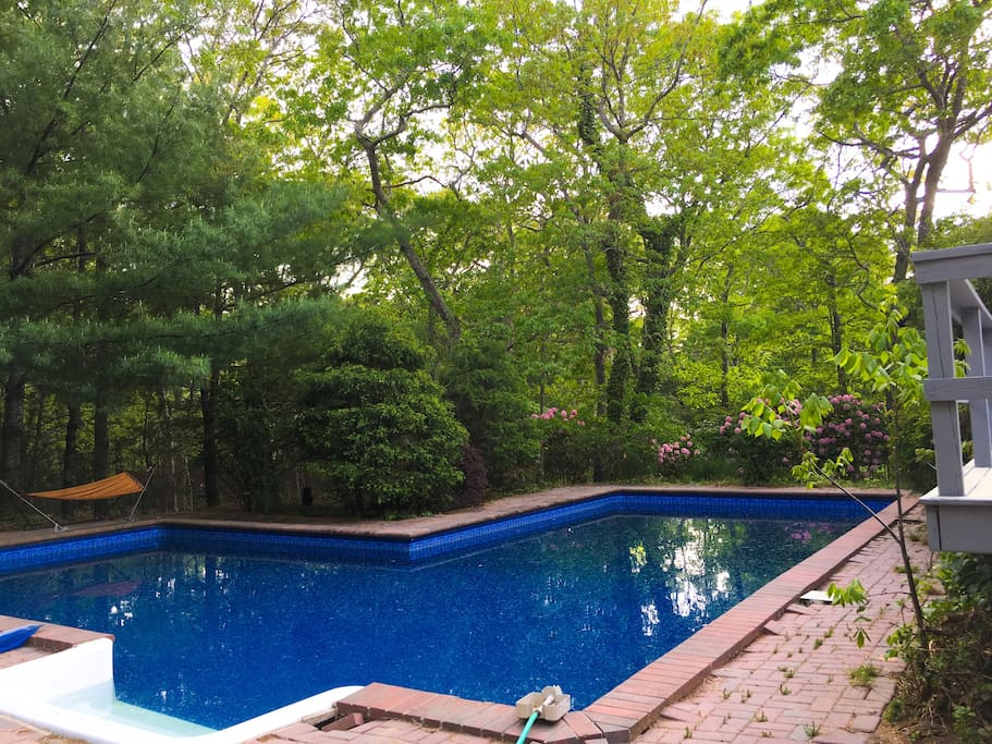 Gorgeous back yard with pool & hammocks