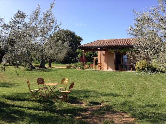 Studio surrounded by olivetrees! - Alquézar - House
