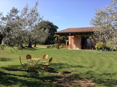 Studio surrounded by olivetrees!
