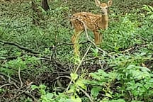Yard attracts a lot of wildlife who are always welcomed, please don't scare them. Please check for deer b4 setting your dog free in the yard. Poo bags are provided on a table on the back patio, please use them. You are welcome to enjoy the patio
