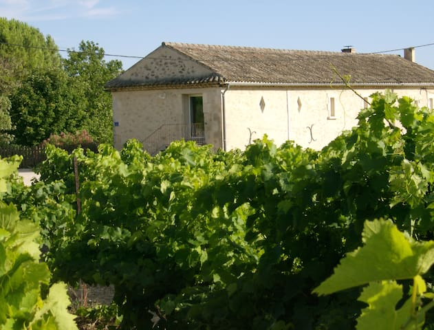 Le vignoble - Cucuron - House