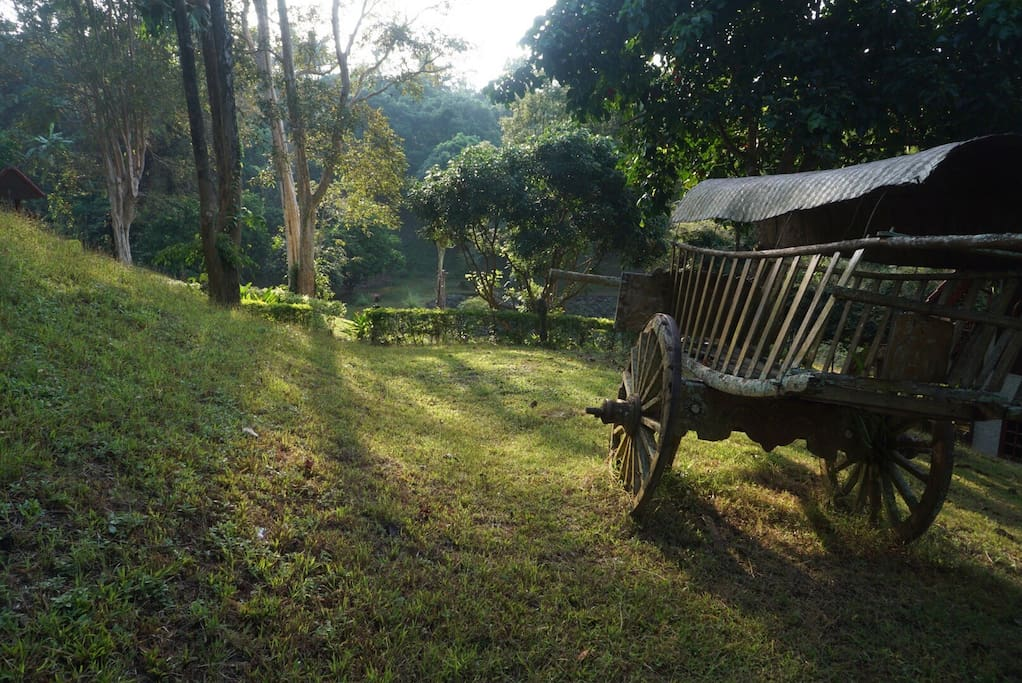Let you escape in the peaceful yard 10 acres of hilly area