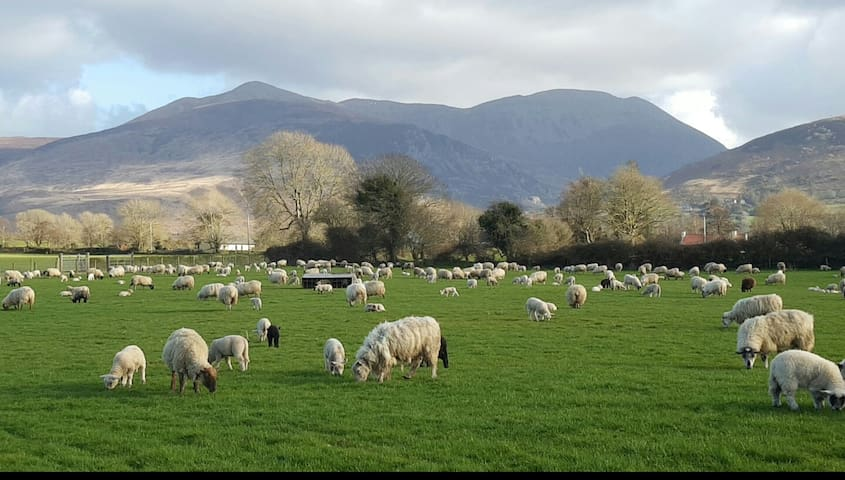 5* Traditional Irish Sheep Farm Cottage Ring of Ky