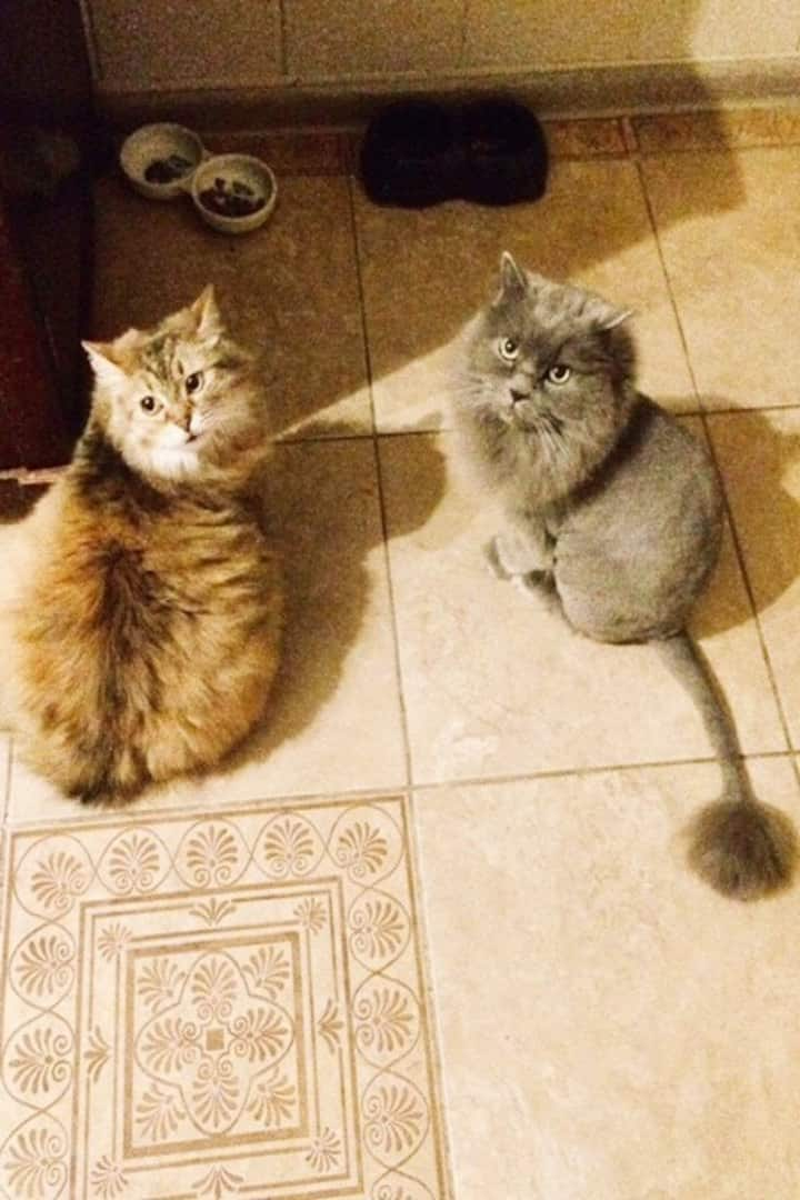 Our friendly cats Fiona and Mr.Darcy