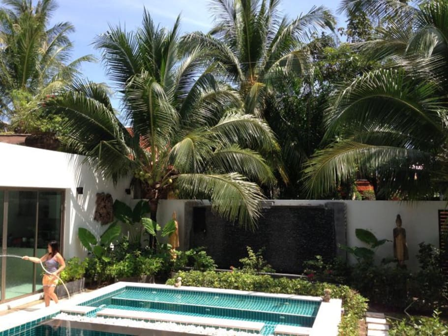 View on the garden and the palm trees