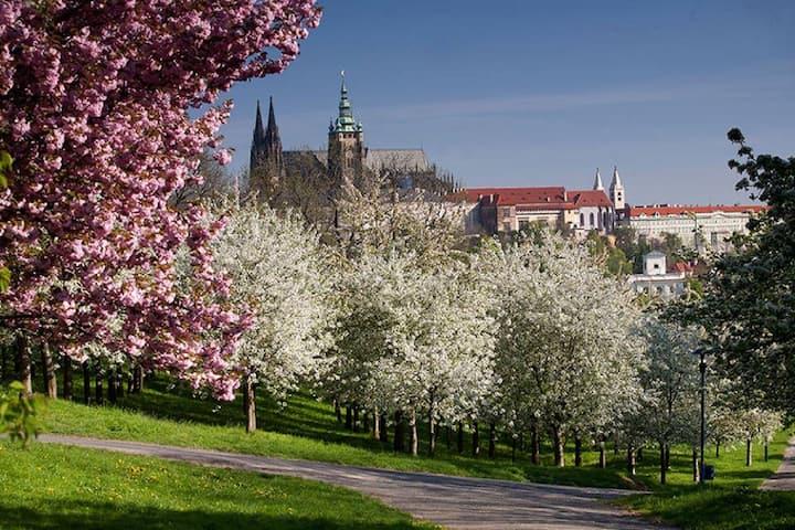 Prague Castle from Petrin Garden Hill