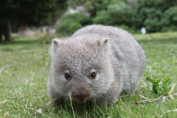 Wombat Family Cottage