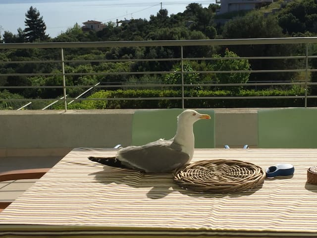 sea gull on our table