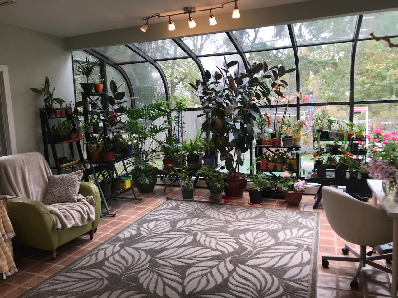 This our kitchen/sun room. We have a variety of plants growing indoor, begonias, lemon, hydrangea, orchids, and many others.