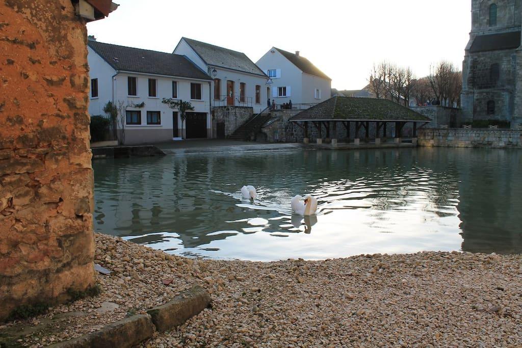 Swan lake in the village