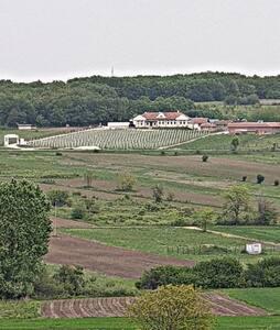 Netaknuta priroda, smeštaj vinarija, blizu Dunava