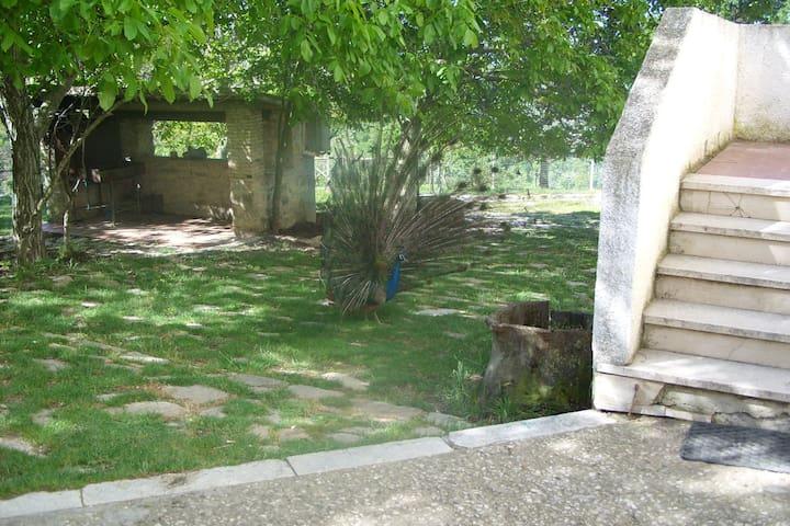 Svegliarsi in masseria nella Daunia - San Marco La Catola - Talo