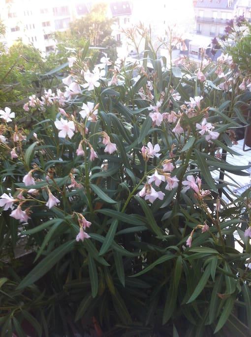 La terrasse en fleur
