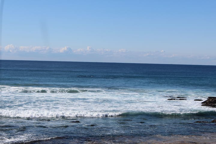 Whale watching from Beautiful Avalon Beach