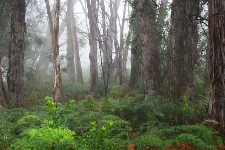 Stringybark Woodland in Cleland Conservation Park