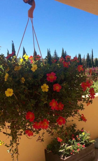Hanging baskets in the finca