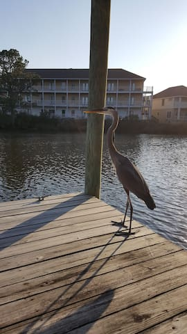 A frequent dock visitor!