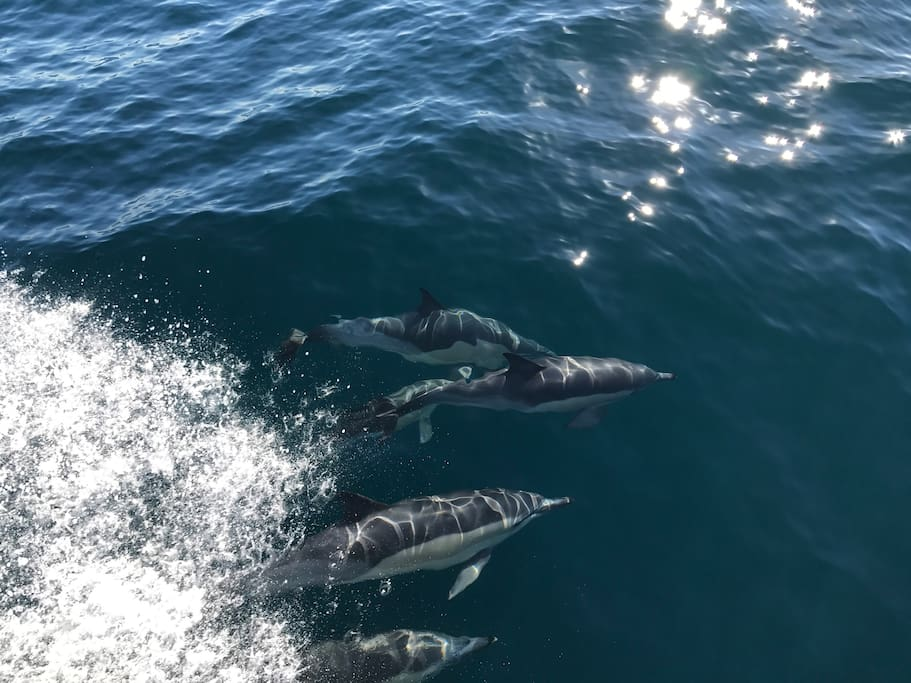 Dolphins in the Fiord.