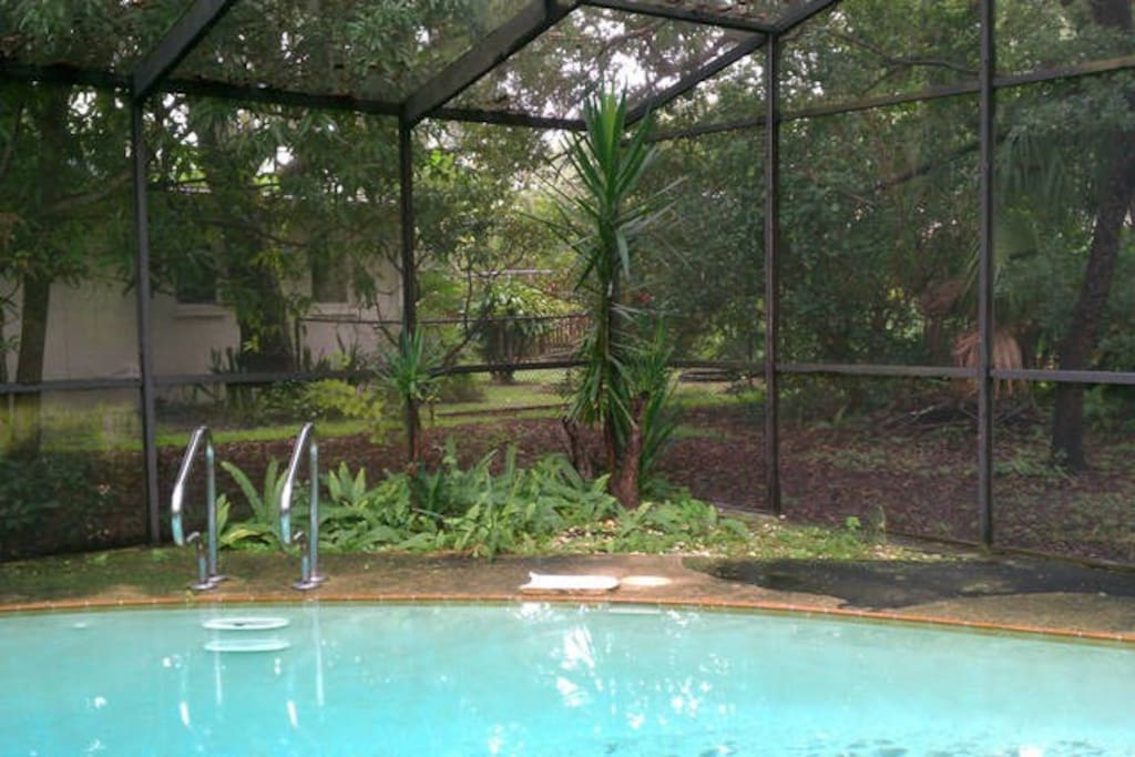 Pool setting in a lush tropical garden. Large oak trees surround screen in quiet back yard.