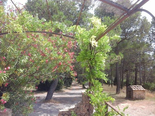 Villa sur au milieu des pins et des vignes - Saint-Nazaire - Villa