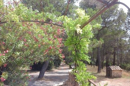 Villa sur au milieu des pins et des vignes - Saint-Nazaire - วิลล่า