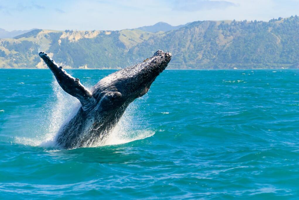 Whale Season November to May