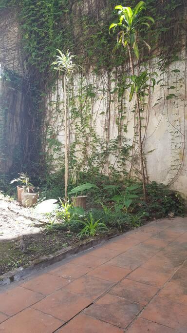 jardín con plantas - súper luminoso