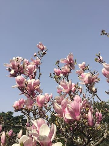 Magnolia House - Lisboa - Daire